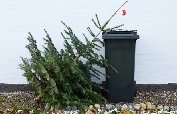 do you take your christmas tree down the day after christmas - When Should You Take Your Christmas Tree Down