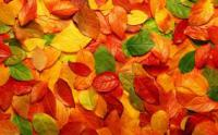 What color of autumn leaf is your favorite?