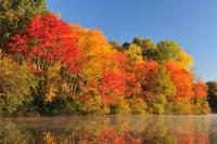 Take a look at this picture of leaves changing color by a lake. What type of feelings does this evoke for you?