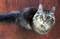 A cat born on August 1, 1989 has just been certified by Guinness World Records as the current oldest living cat named Corduroy. Are you familiar with this story?
