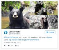 The park said if you must take a photo with a bear in the background, head to your local zoo instead. Or have a park ranger take a photo of you, keeping a respectful distance from the bears. Do you agree with the parks statement?