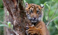 Threats to Tigers are Habitat Loss, Human Wildlife Conflict, and Effects of Climate Change. Were you familiar with these 3 facts?