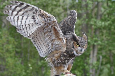 Fun Facts about Owls. Which facts are you familiar with?