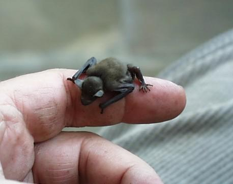 Do you think this could be possibly the World's smallest mammal?