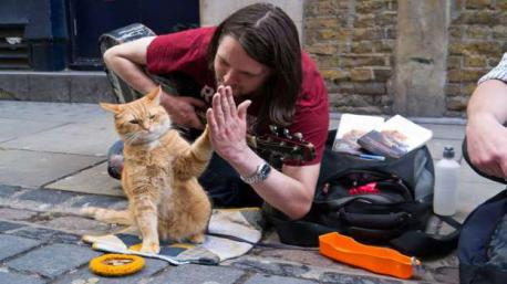 A Street Cat Called Bob: A homeless drug addict turned his life around with the help of a cat. When James Bowen was befriended by a stray ginger tom in London they paired up and began busking together. After becoming a sensation, Bowen went on to sell four million copies of his book A Street Cat Named Bob, earning around $734,000, and making Bob one well-off feline. Have you heard of Bob (the street cat) and James story before reading this survey?