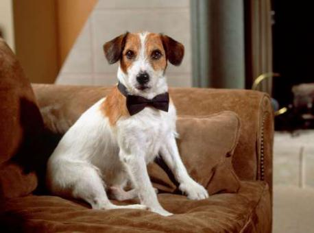 MOOSE: Moose didn't inherit his money – he made it. Better known as Eddie the dog in TV sitcom Frasier (though he shared the part with his son Enzo), the Jack Russell terrier is believed to have made around $9,000 per episode. When he died in 2006, aged 16, Moose was thought to have a net worth of more than $3 million. Do you remember Eddie the dog from the TV show Frasier?