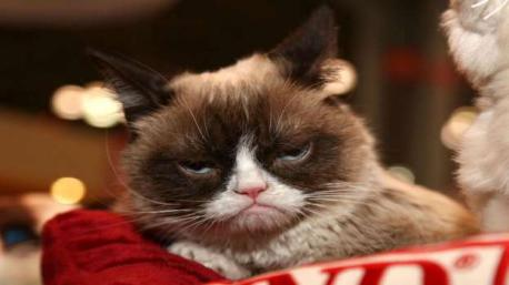 GRUMPY CAT: Grumpy Cat (real name Tardar Sauce) is a prime example of the power of the internet. Born with dwarfism, it looked as if this depressed-looking puss was set for a life of misery. But the public took to her and she currently boasts 312,000 Twitter followers, 1.1 million Instagram fans, and has 8 million likes on Facebook. Grumpy Cat is also a movie star and ambassador of iced coffee brand Grumppuccino. She's now thought to be worth up to $100 million (£68 million). Are you familiar with Grumpy Cat?