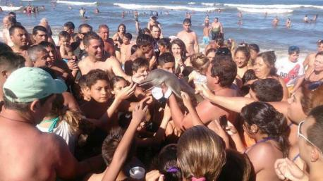A dolphin died after it was taken from the sea and paraded around a beach so tourists could take selfies with it. Pictures have emerged of the small mammal on an Argentine beach being handled and passed between tourists like a trophy. Moments later, the dolphin's lifeless body was found lying on the sand. Are you familiar with this recent dolphin story?