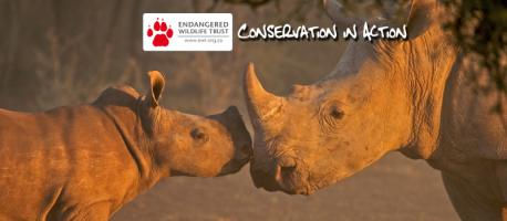Are you familiar with the Endangered Wildlife Trust in South Africa?