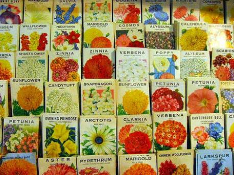 The Importance of the Wild Annuals and the Wild Perennials. Which facts are you familiar with?