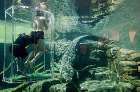 Swim alongside crocodiles in Australia: Get up close and personal with one of the deadliest creatures on Earth at the Crocosaurus Cove in Darwin, nicknamed the