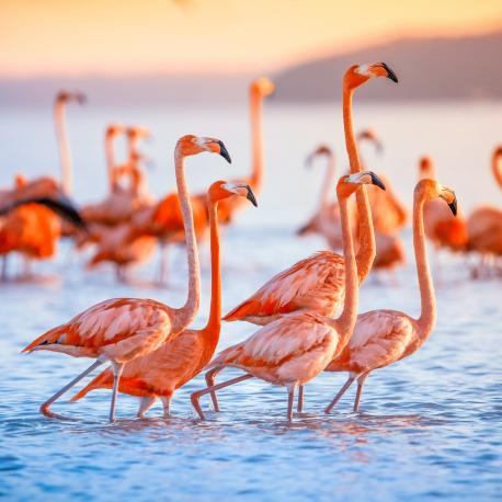 Have you ever seen a Flamingo in real life?
