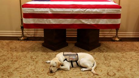 Sully, the service dog of former President George H.W. Bush, who passed away at age 94, on Friday night, spent Sunday night lying before Bush's flag-draped casket in Houston. Jim McGrath, spokesman for the Bush family, tweeted out a photo on Sunday night, captioning it