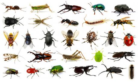 You enjoyed part 1, so here's part 2. Animal themed trivia is always fun and who doesn't love to learn something new? Here's fun fact #1: There are more than 1.4 billion insects for EACH HUMAN on the planet, according to recent estimates. Ants have colonised almost every landmass on Earth. Their population is estimated as 107–108 billion alone, in comparison to approx. 7 billion humans on the planet. Now, does this little trivia item