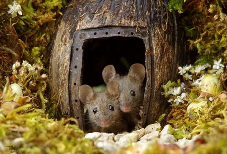 (Source:boredpanda.com) Recently, photographer Simon Dell stumbled upon a family of mice running around his garden. Instead of reaching for the traps, however, he took out his tools. Dell built the mice a miniature village and they repaid him by posing in front of his camera.