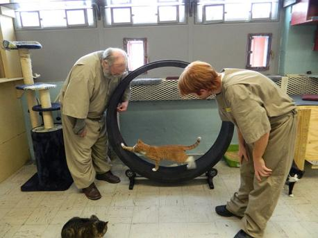 A program at Pendleton Correctional Facility is getting shelter cats out of their cages and into the laps of prisoners. FORWARD provides a dozen cats with a large room of their own where prisoners care for them. The cats are able to interact with people, increasing their chances of adoption, and participating prisoners learn responsibility by feeding, grooming and cleaning up after the felines. Did you hear about this program before?