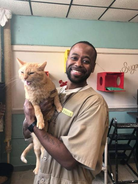 FORWARD began in March 2015. To work with the cats, inmates must be screened and complete an interview with an employee of the The Animal Protection League. The cats' prison sanctuary was made possible through donations, and much of their play area — which includes scratching posts and floor-to-ceiling climbing structures — was built from recycled materials by the inmates. Although the sanctuary isn't open to the public, the cats can be adopted by prison staff or inmates' families. When a kitty gets a forever home, APL brings another cat into the prison sanctuary. It may seem like the cats benefit the most from the program, but APL Director Maleah Stringer says the inmates take away just as much from it.