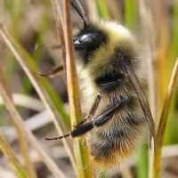 Are there any projects to protect bees in your area? If your answer is