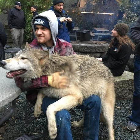 Did you ever meet friendly wolves?