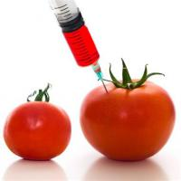 Do you think GMOs are dangerous?