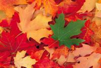 What is your favourite colour leaf in fall?