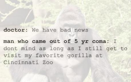 Due to the hackers, trolls and Harambe memes being sent their way. The Cincinnati Zoo has since decided to shut down their Twitter account. What do you think is the most sensible way to have handled this situation?