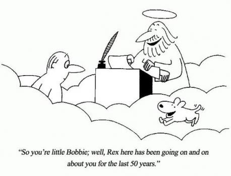 Do you believe animals go to heaven like people do?