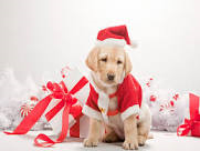 Do you hang a stocking for your pet(s) at Christmas?