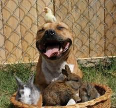 How do you feel when you think of pitbulls?