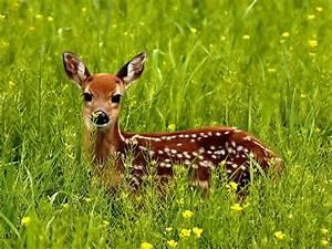 Do you live in an area where you see deer often, such as when you are walking outside or driving?