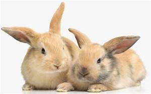 Have you ever had any pet rabbits?