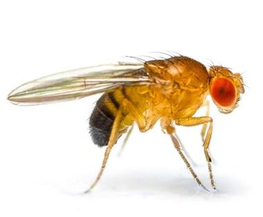 Have you ever had a problem with fruit flies and/or gnats where you live?