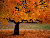 Are you excited to see Autumn start?
