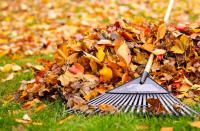Do you rake the beautiful fall leaves from your yard?