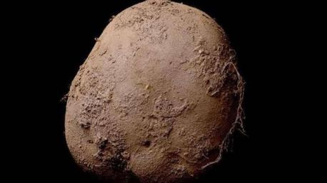 A European businessman has purchased this photo of a potato for 1 million euros ($1,086,950). Is this first time you are hearing or seeing an image of this expensive potato?