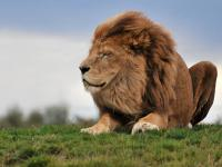 Do you believe the lion is the mightiest in the animal kingdom?