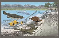 For two decades, scientists examined fossils and sediment in present-day Mali to form an accurate picture of what this prehistoric environment looked like. They concluded the body of water was warm and shallow and, less pleasantly, was home to five-foot-long catfish and 40-foot-long sea snakes. Does it surprise you that the fossils found in the desert were of giant modern-day marine creatures?