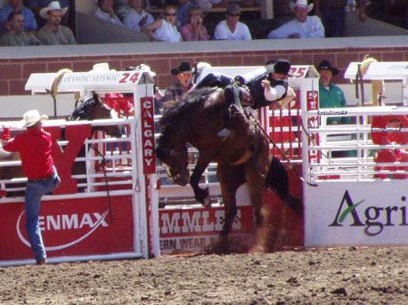 Have you ever went to the Calgary Stampede in Calgary, Alberta?