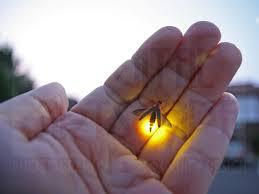Do you have lightning bugs where you live?