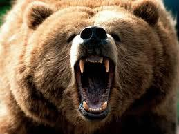 Watching the Revenant made me think about how scared I would be coming face to face with a bear. Have you ever seen a bear up close in the wild?