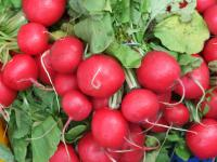 What to do you know about Radishes?