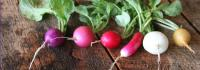 Here are the health benefits of Radishes, which ones are you aware of?
