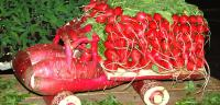 Are you fond of radishes?