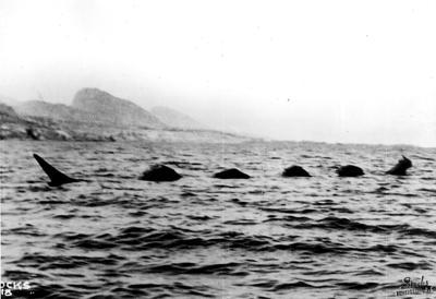 The Loch Ness monster isn't the only mythical lake creature. The ogopogo is said to be a snakelike monster living in BC's Okanagan lake, and the Mokele-mbembe is a dinosaur-like water entity living in the Congo river basin. Have you heard of these other water-dwelling cryptids?