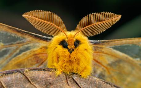 Finally, poodle moths are super cute and cuddly! Do you agree?