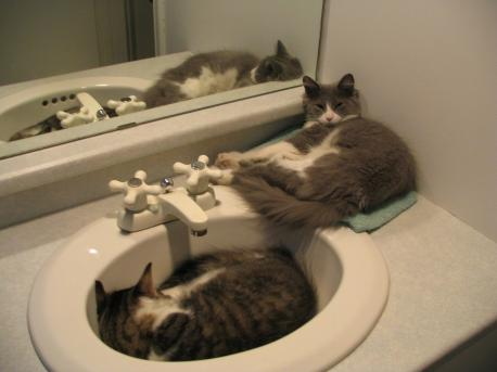 Mine used to like to sleep in the sink, has your cat ever done that?