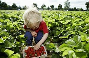 And in your area currently do you think it will be possible to go and pick strawberries at a berry farm? And take the whole family for some outdoor fun. Would this be something of interest to you?