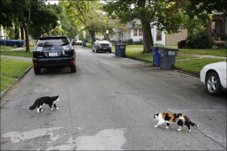 Are stray cats a problem in your neighborhood?