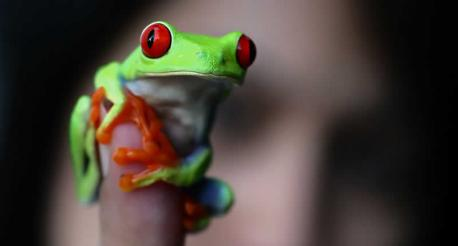 How open would you be to owning a frog?