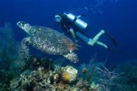 Have you ever gone deep sea or scuba diving?